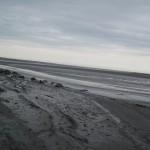 rando_msm_220